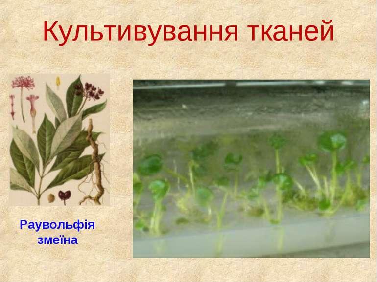 Культивування тканей Раувольфія змеїна