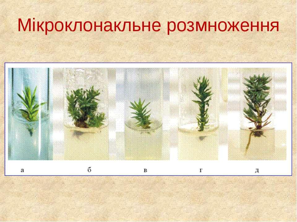 Мікроклонакльне розмноження
