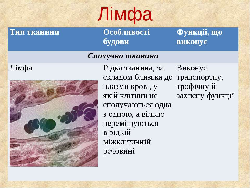 Лімфа Тип тканини Особливості будови Функції, що виконує Сполучна тканина Лім...