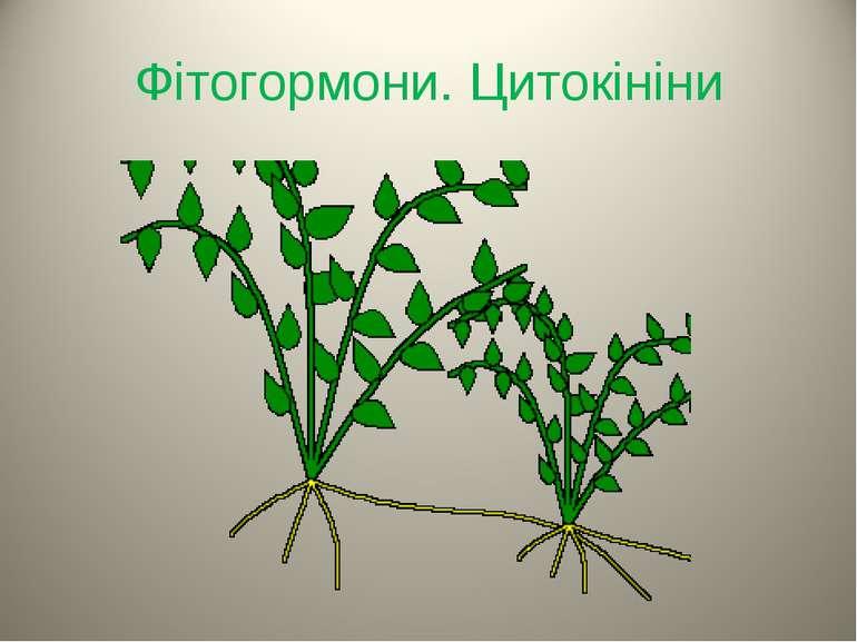 Фітогормони. Цитокініни