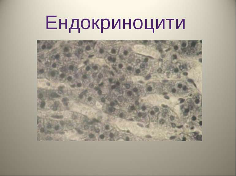 Ендокриноцити