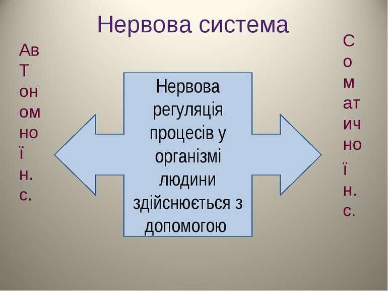 Нервова система Нервова регуляція процесів у організмі людини здійснюється з ...