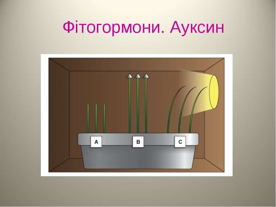 Фітогормони. Ауксин
