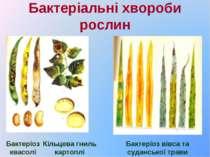 Бактеріальні хвороби рослин Бактеріоз квасолі Кільцева гниль картоплі Бактері...