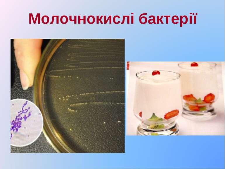 Молочнокислі бактерії