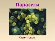 Паразити Cтрептокок