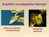 Аеробні та анаеробні бактерії Анаеробні шигелли Облігатні аероби –палочка Кохха
