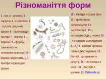 Різноманіття форм 12 – бактерія в формі зірки; 13 – представник актиноміцеті...