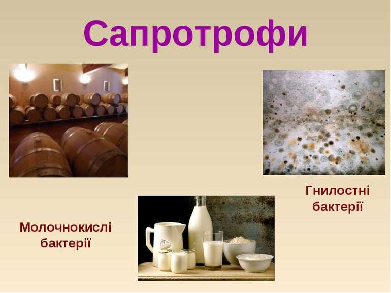 Сапротрофи Гнилостні бактерії Молочнокислі бактерії