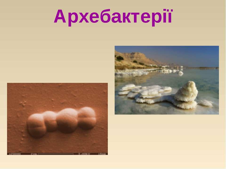 Архебактерії