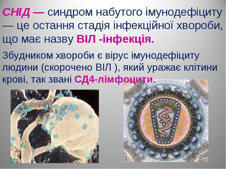 СНІД — синдром набутого імунодефіциту — це остання стадія інфекційної хвороби...