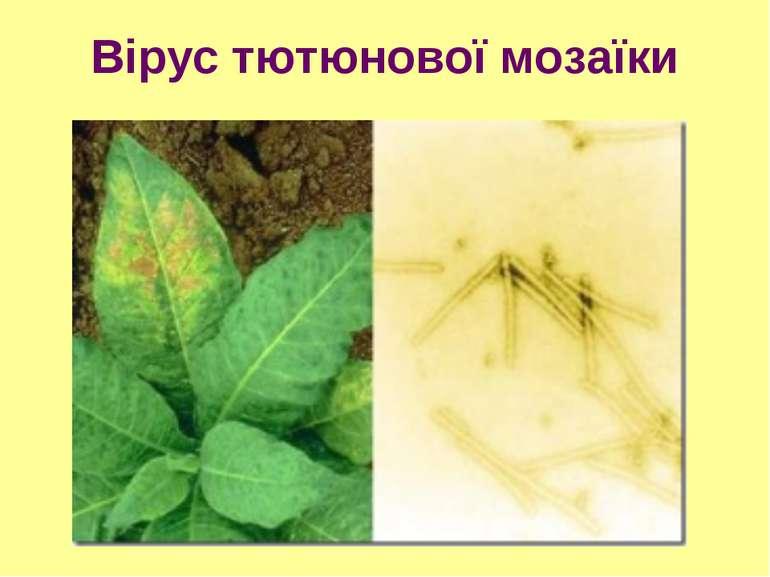 Вірус тютюнової мозаїки