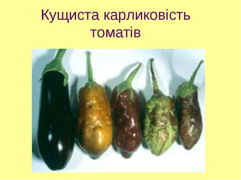 Кущиста карликовість томатів