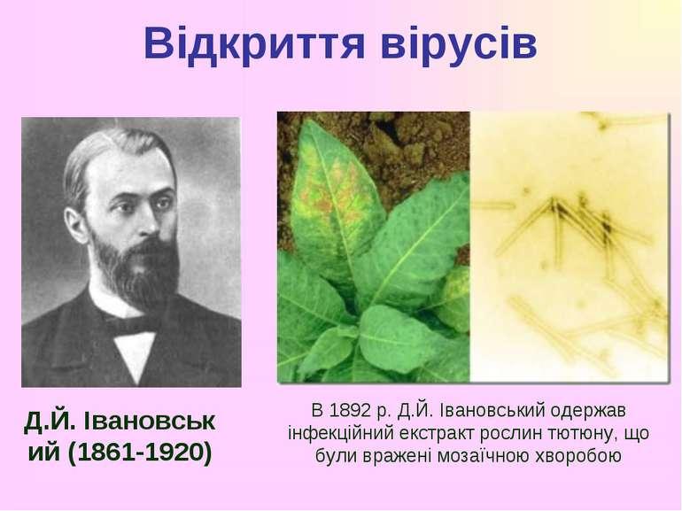 Відкриття вірусів Д.Й.Івановський(1861-1920) В 1892 р. Д.Й. Івановський оде...