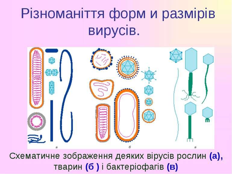 Різноманіття форм и размірів вирусів. Схематичне зображення деяких вірусів ро...
