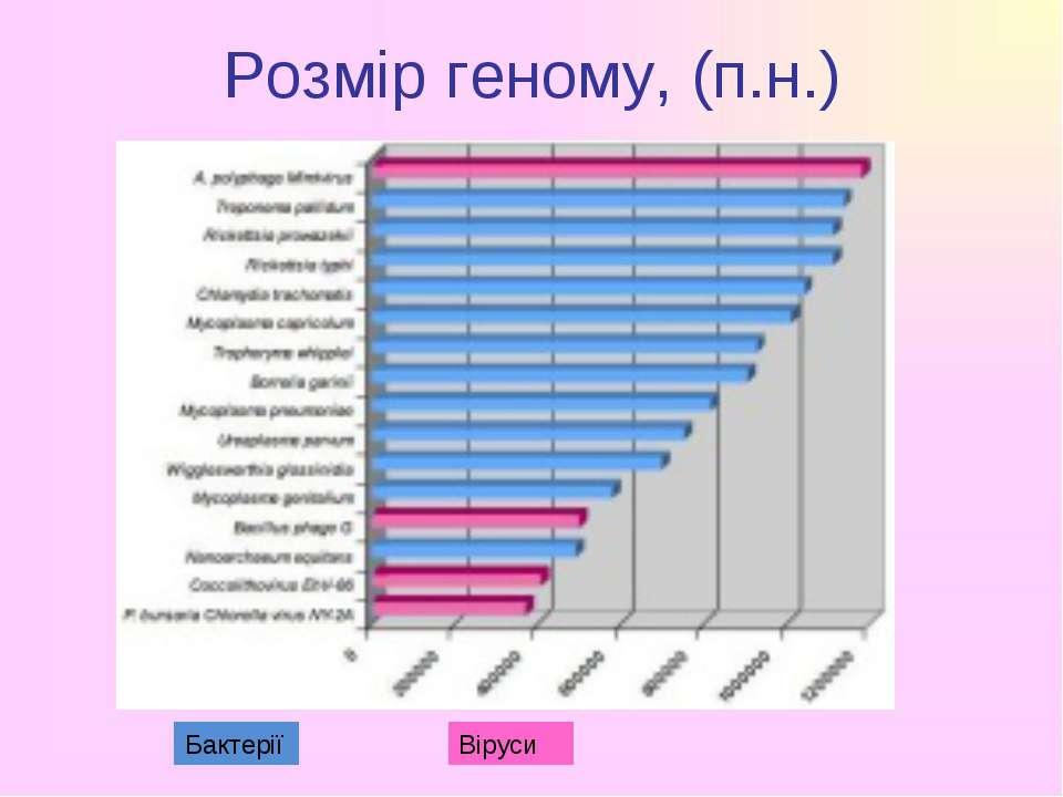 Розмір геному, (п.н.) Бактерії Віруси