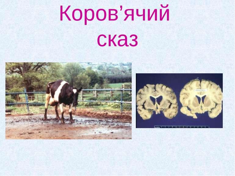 Коров'ячий сказ