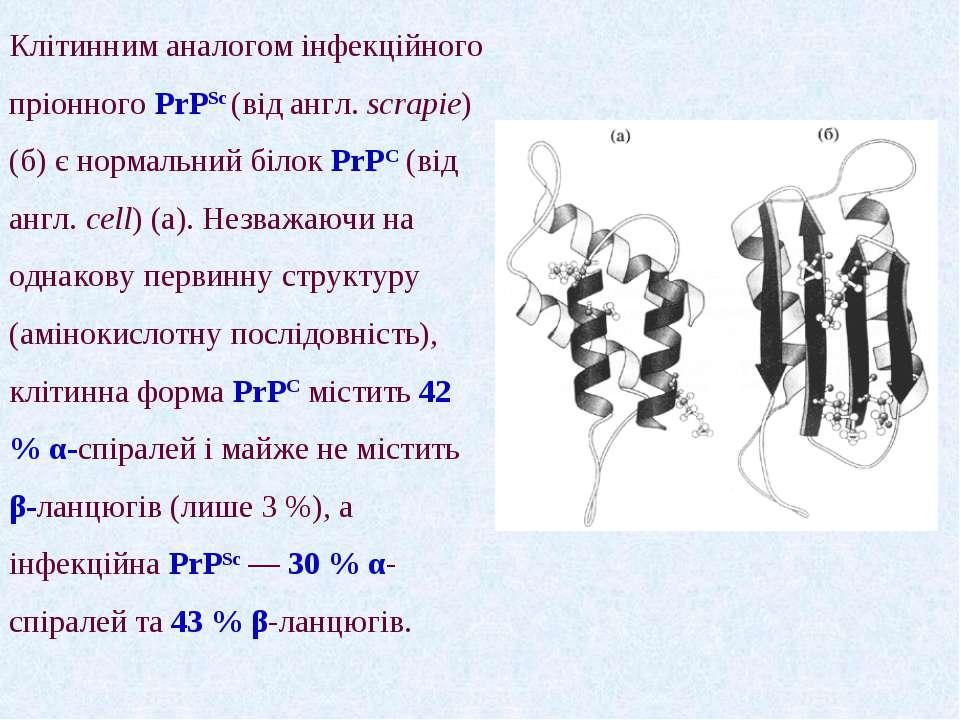 Клітинним аналогом інфекційного пріонного PrPSc (від англ. scrapie)(б) є норм...
