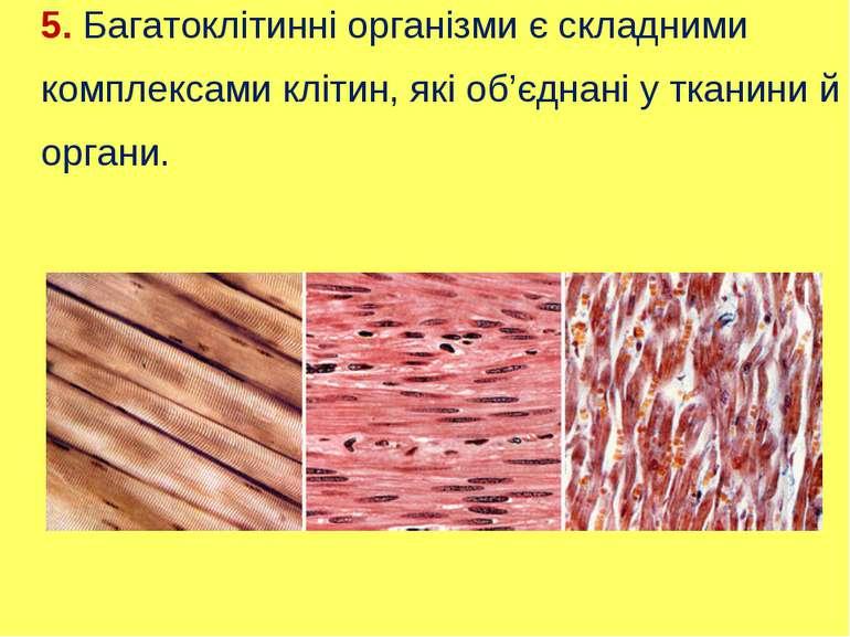 5. Багатоклітинні організми є складними комплексами клітин, які об'єднані у т...