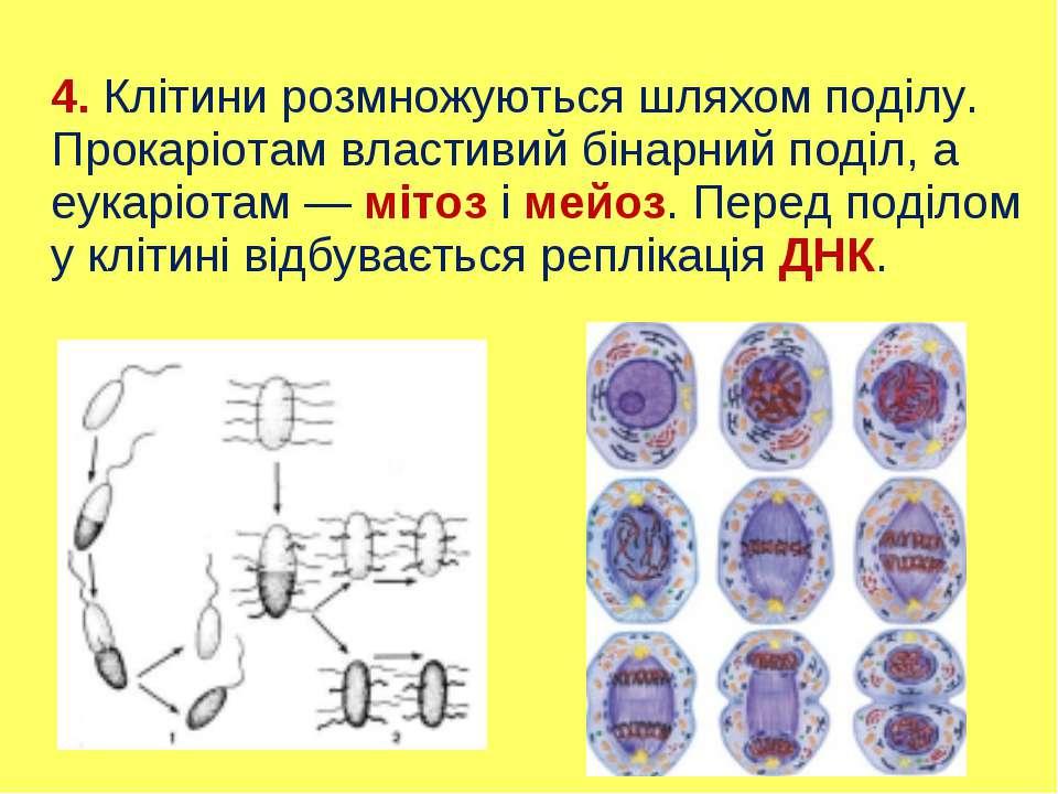 4. Клітини розмножуються шляхом поділу. Прокаріотам властивий бінарний поділ,...