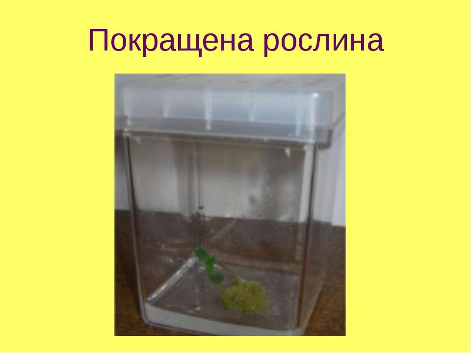 Покращена рослина