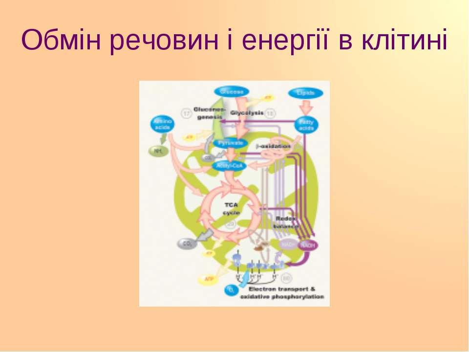 Обмін речовин і енергії в клітині