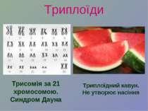 Триплоїди Трисомія за 21 хромосомою. Синдром Дауна Триплоїдний кавун. Не утво...