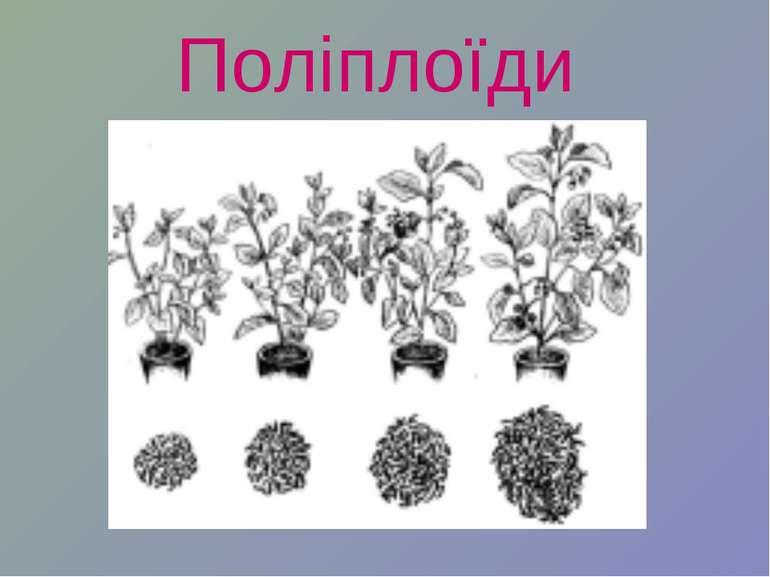 Поліплоїди