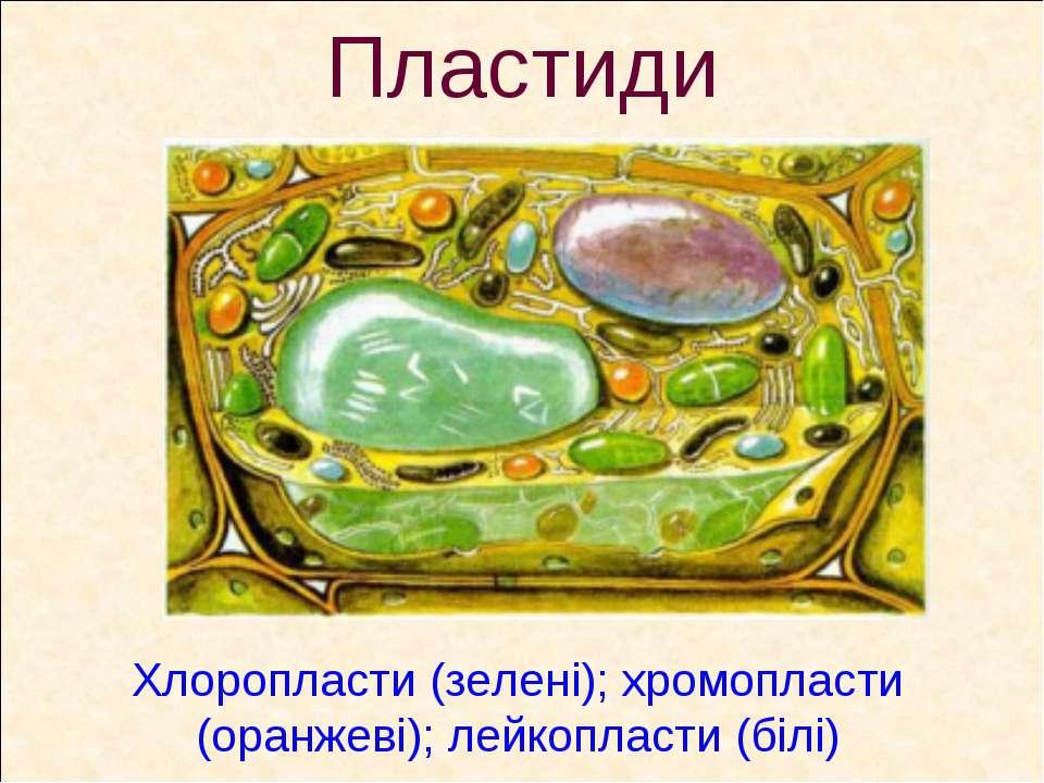 Пластиди Хлоропласти (зелені); хромопласти (оранжеві); лейкопласти (білі)