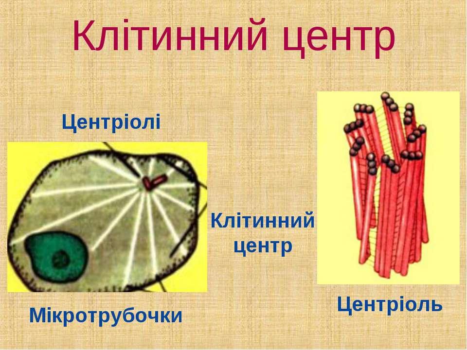 Клітинний центр Центріолі Клітинний центр Мікротрубочки Центріоль