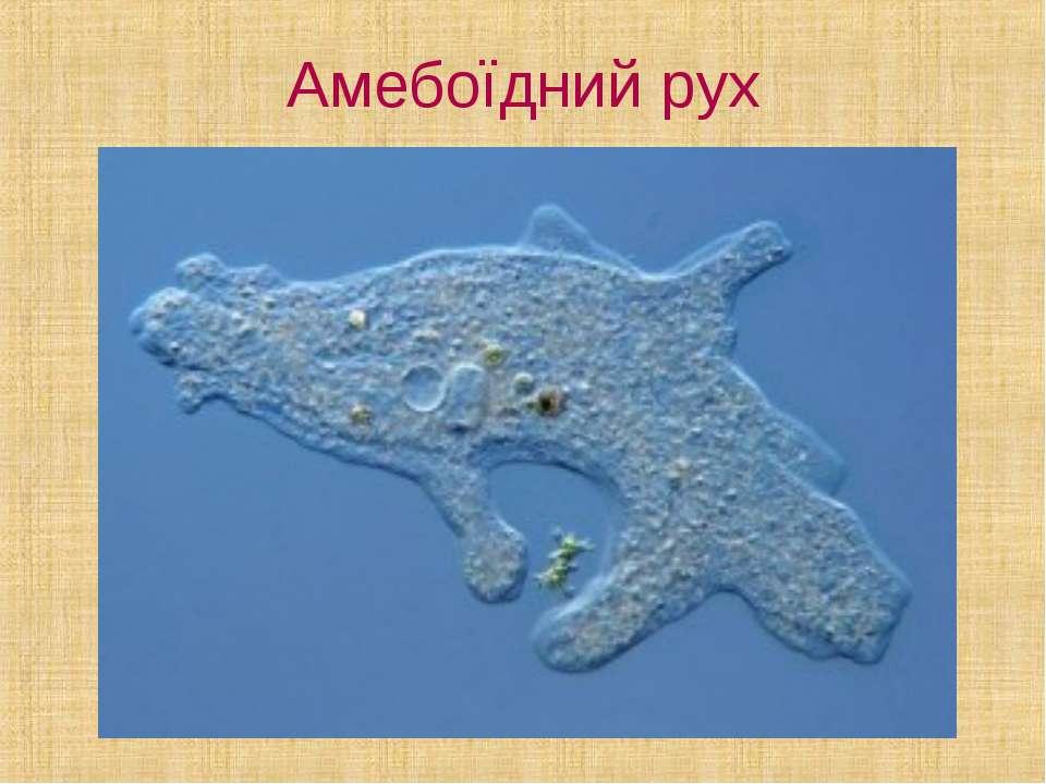 Амебоїдний рух