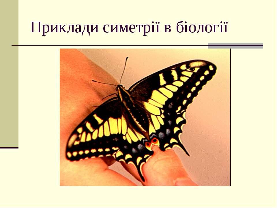 Приклади симетрії в біології