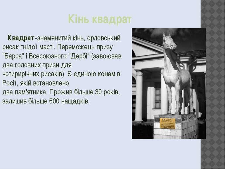 Кінь квадрат Квадрат-знаменитийкінь,орловський рисакгнідої масті. Перемож...