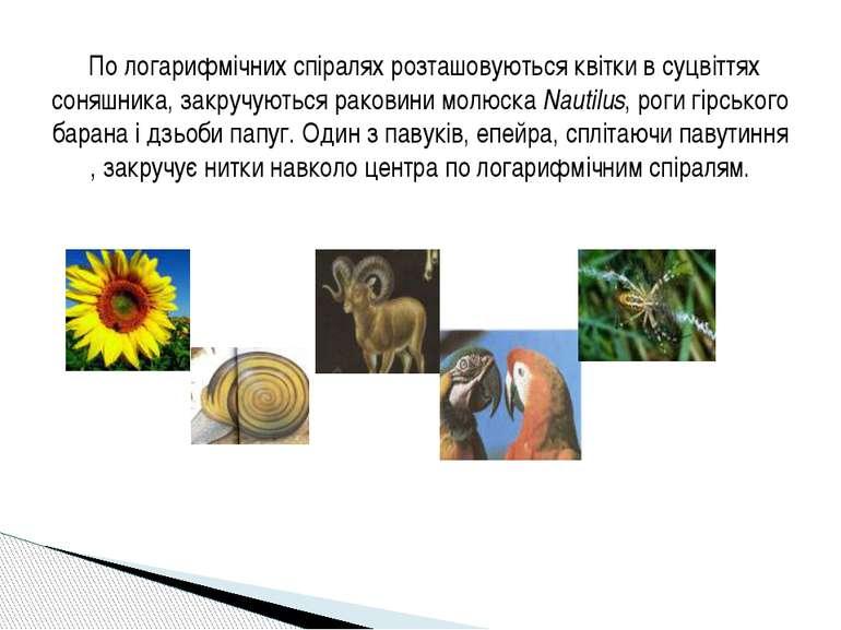 По логарифмічних спіралях розташовуються квітки в суцвіттях соняшника, закруч...