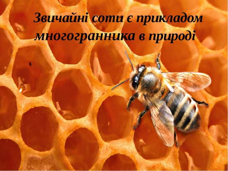 Звичайні соти є прикладом многогранника в природі