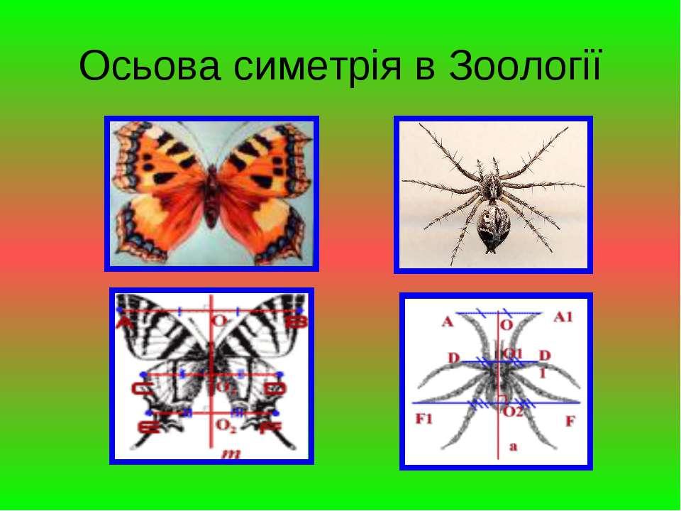 Осьова симетрія в Зоології