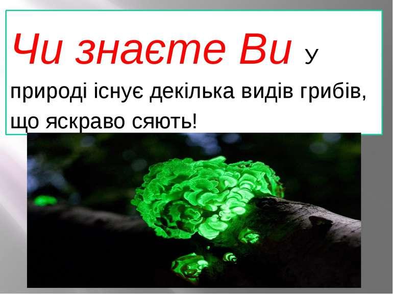 Чи знаєте Ви У природі існує декілька видів грибів, що яскраво сяють!