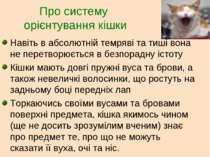 Про систему орієнтування кішки Навіть в абсолютній темряві та тиші вона не пе...