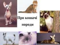 Про кошачі породи