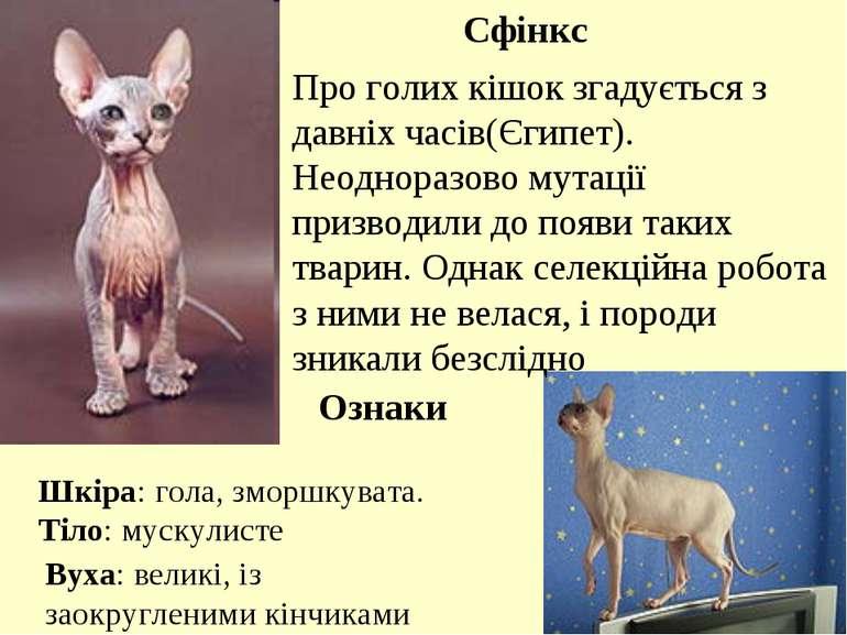 Сфінкс Про голих кішок згадується з давніх часів(Єгипет). Неодноразово мутаці...