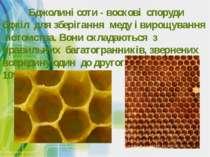 Бджолині соти - воскові споруди бджіл для зберігання меду і вирощування потом...