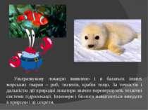 Ультразвукову локацію виявлено і в багатьох інших морських тварин – риб, тюле...