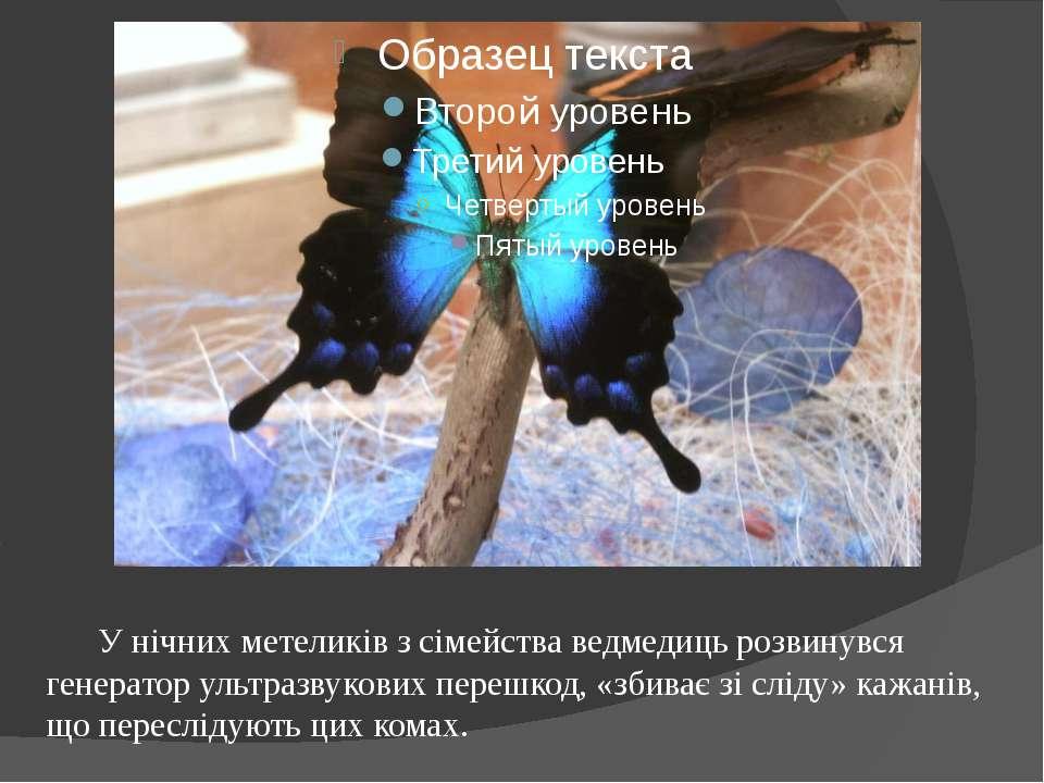 У нічних метеликів з сімейства ведмедиць розвинувся генератор ультразвукових ...