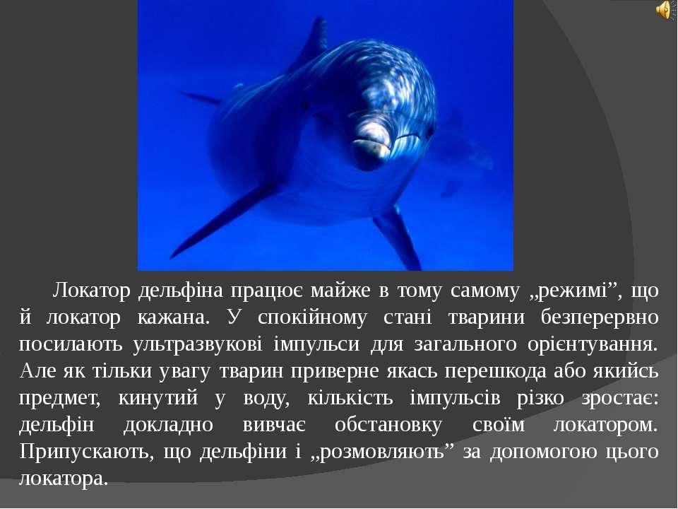 """Локатор дельфіна працює майже в тому самому """"режимі"""", що й локатор кажана. У ..."""
