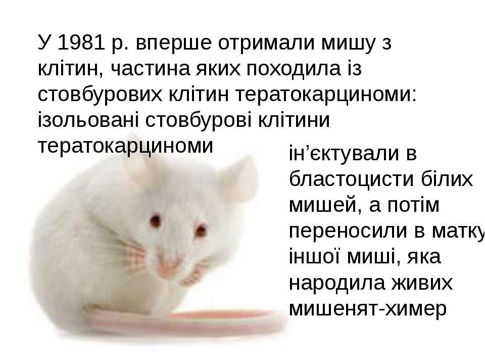 У 1981 р. вперше отримали мишу з клітин, частина яких походила із стовбурових...