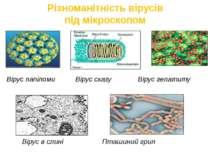 Різноманітність вірусів під мікроскопом Вірус папіломи Вірус сказу Вірус гепа...