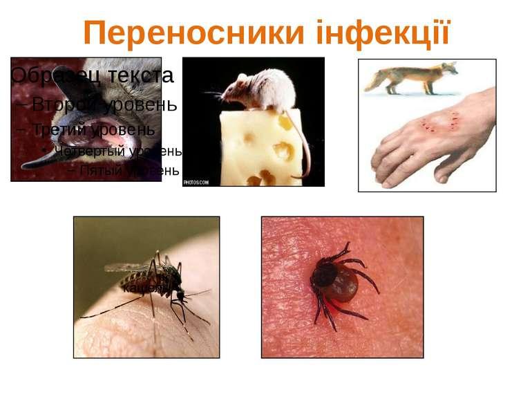 Переносники інфекції