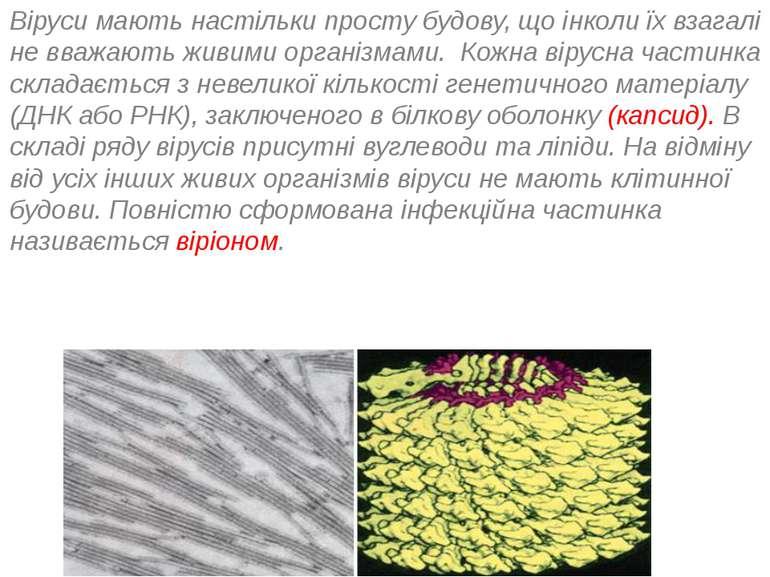 Віруси мають настільки просту будову, що інколи їх взагалі не вважають живими...