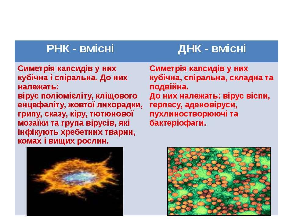 Класифікація вірусів РНК -вмісні ДНК -вмісні Симетріякапсидіву нихкубічнаіспі...