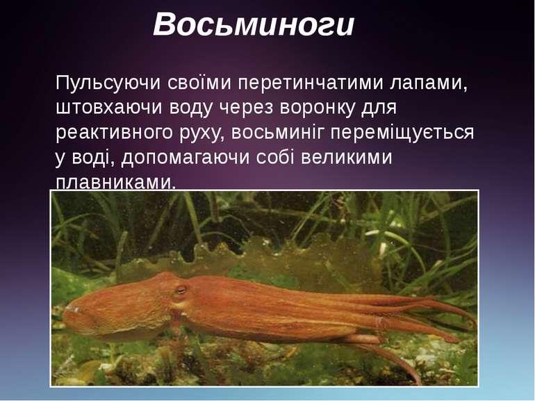 Восьминоги Пульсуючи своїми перетинчатими лапами, штовхаючи воду через воронк...